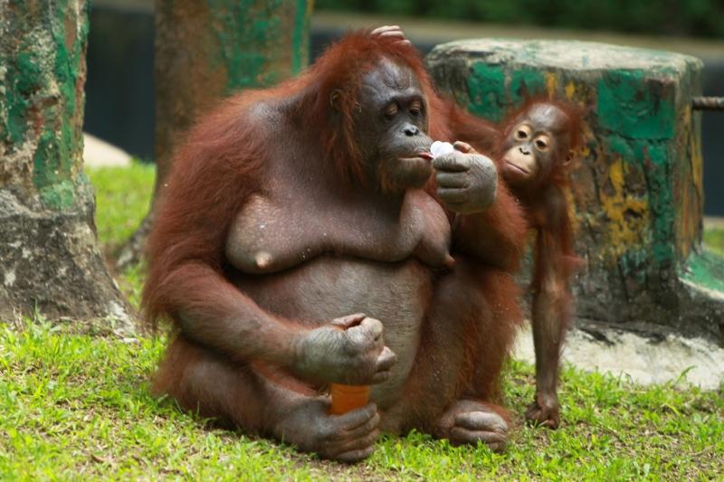 Sở thú Ragunan