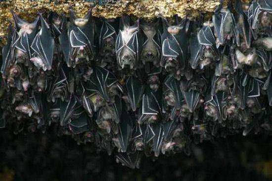 Đền thờ hàng nghìn con dơi độc đáo ở Indonesia