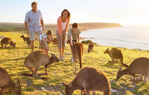 Những chú Kangaroo của Úc