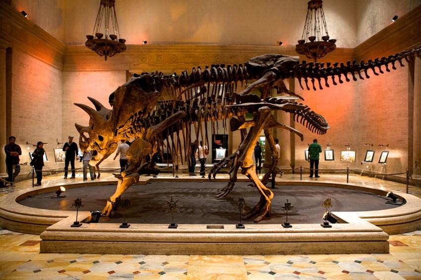 Bảo tàng Lịch sử Tự nhiên Los Angeles County