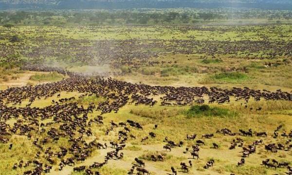 Một Kenya hoang dã