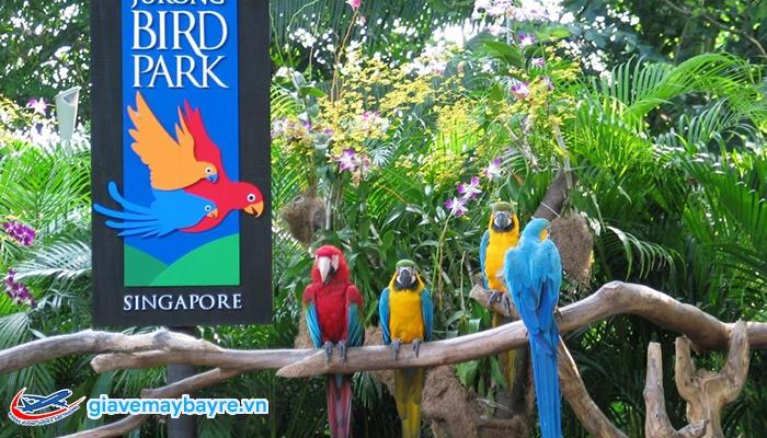 Những chú vẹt rất đẹp ở Jurong Bird Park
